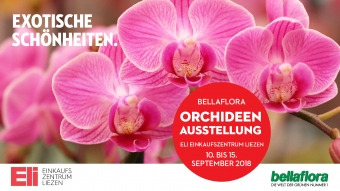 Beamer ELI Orchideen 1920x1080px September 2018